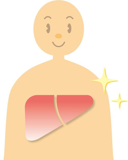 肝臓にうれしい成分とも言われています